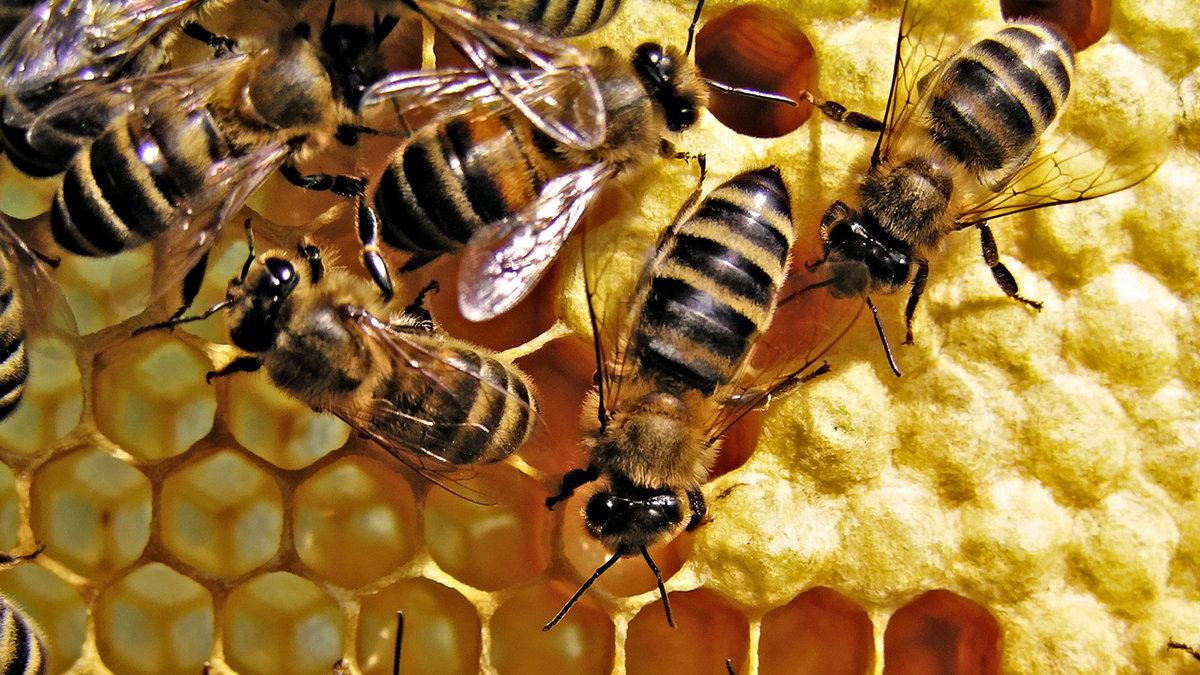 так картинка соты с пчелами газель бизнес печка