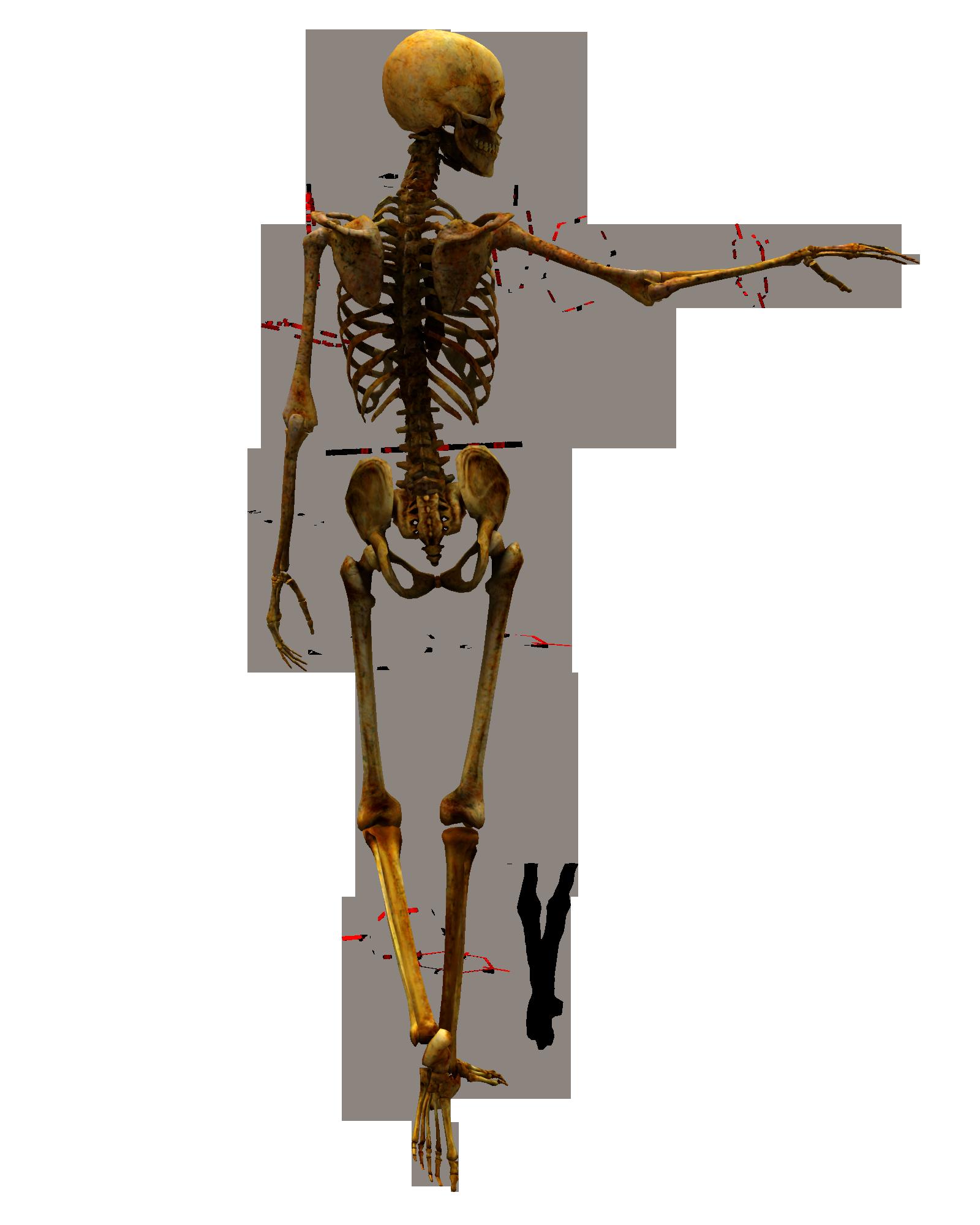 Картинки костей человека, класс картинки
