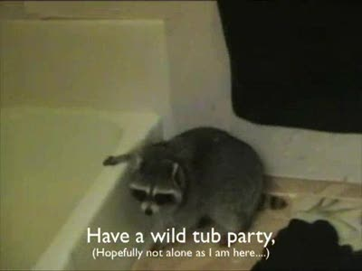 Happy Birthday message to raccoon Willie - from raccoon Outlaw