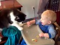 Cute Cats and Dogs Love Babies Compilation 2015