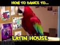 How to Dance to... Music Genres with Birds