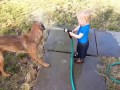 Dogs and Babies Playing with Hoses Compilation 2015