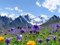 mountain_flowers_t888by_00010